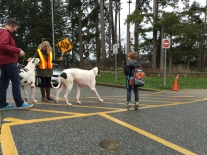 Yes, those are dogs not horses using the crosswalk